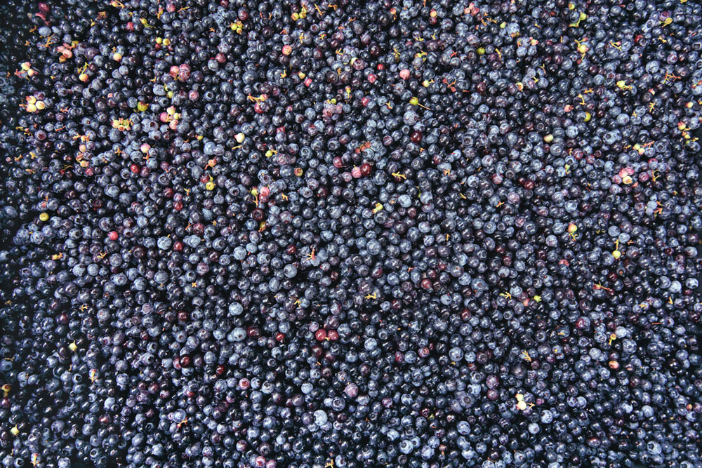 mdwphotographic-blueberries9163